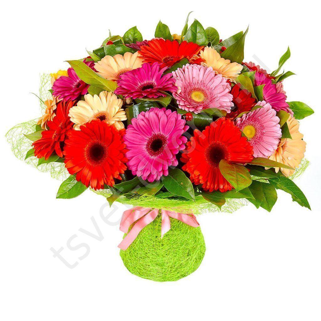 Заказ цветов в сочи недорого доставка цветов николь
