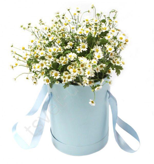 Цветы полевые купить в москве