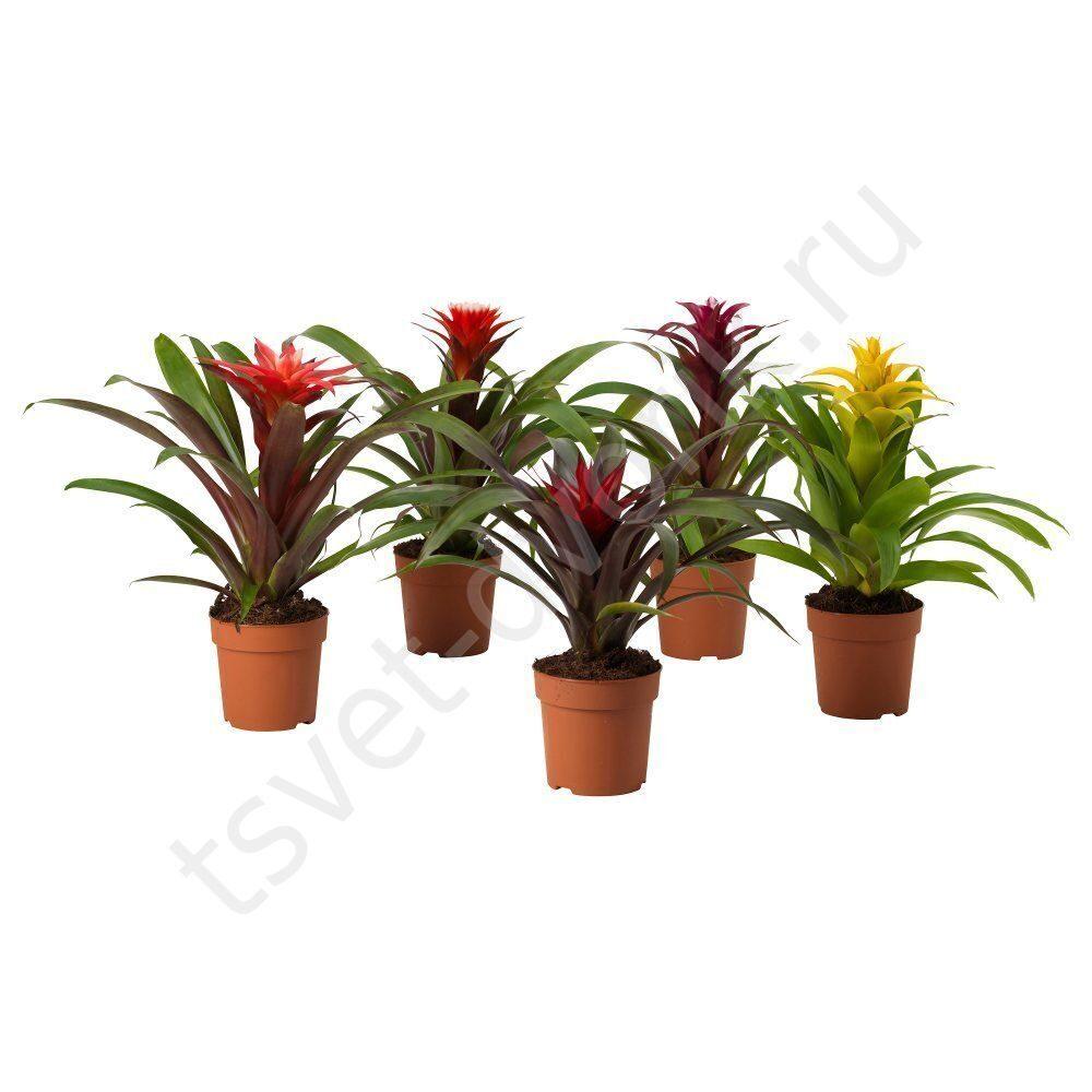 Google цветы фото комнатные