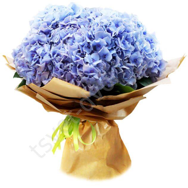 Гортензии купить букет москва, семена комнатных цветов купить гомель