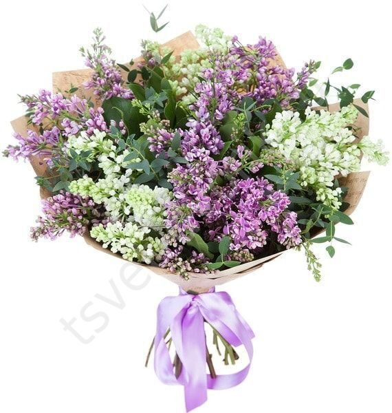 букет тюльпанов 1