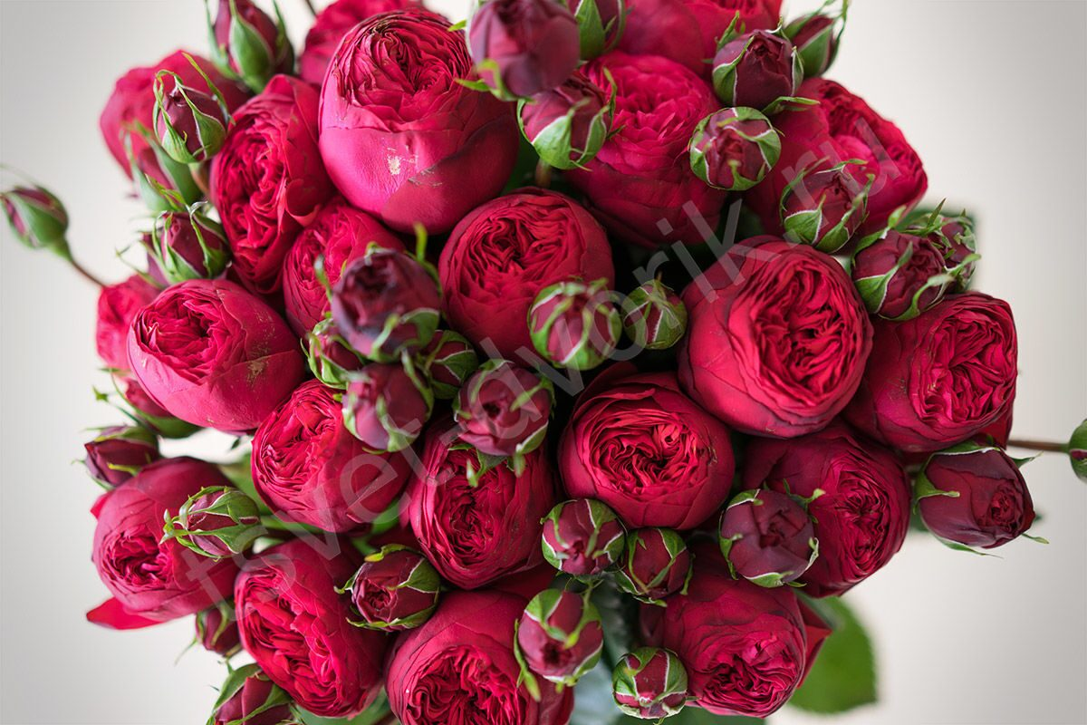 Где купить пионовидную розы в москве